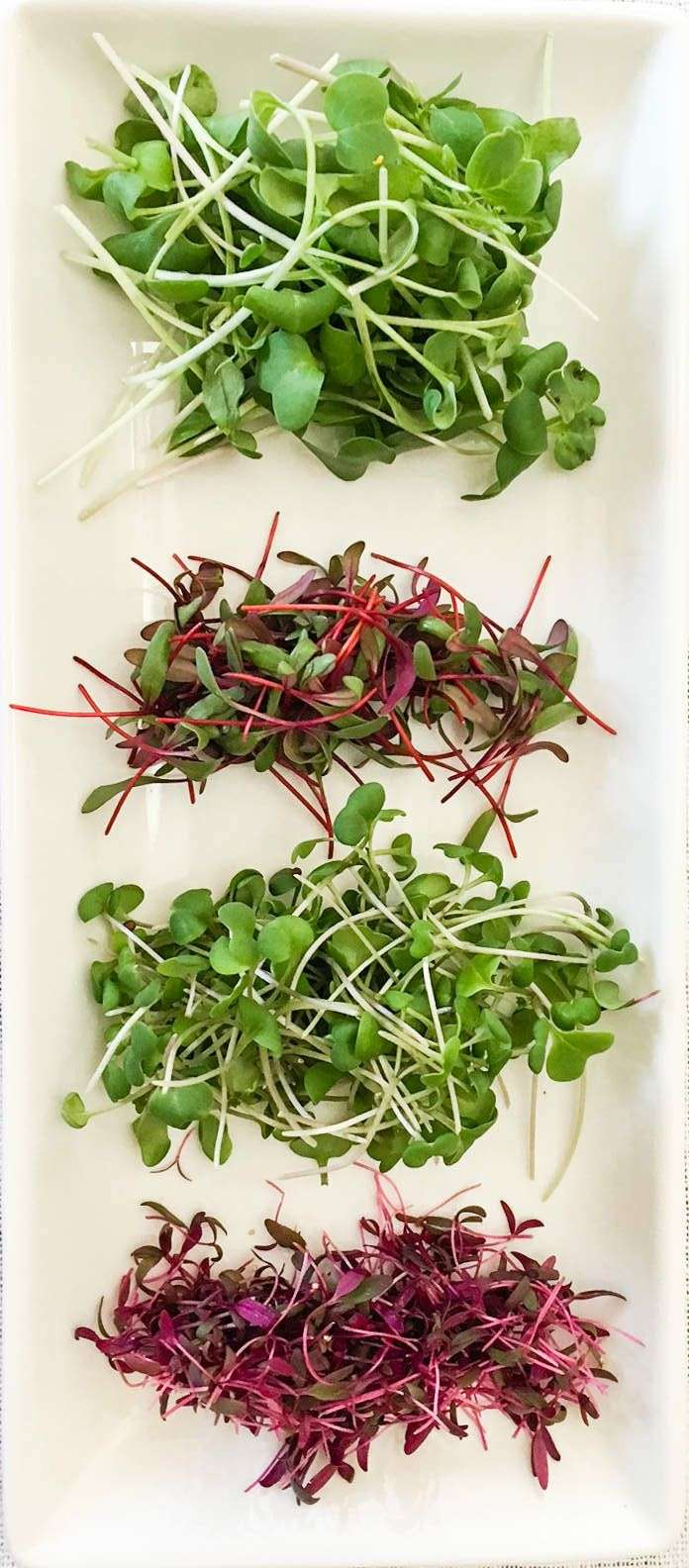 Conheça os microverdes e confira 7 razões para cultivá-los