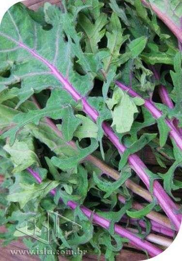 Couve Kale Califórnia