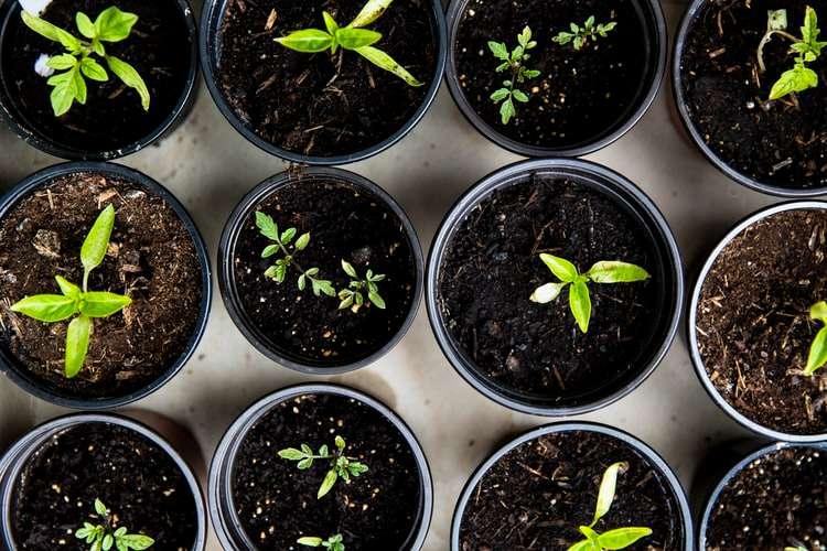 4 sementes orgânicas para você plantar em casa