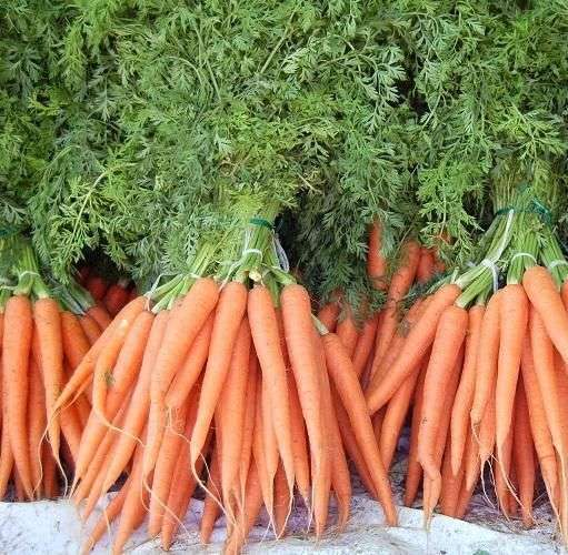 Semente de cenoura orgânica