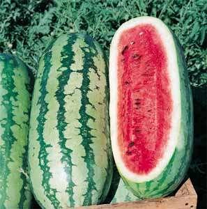 Semente de melancia orgânica